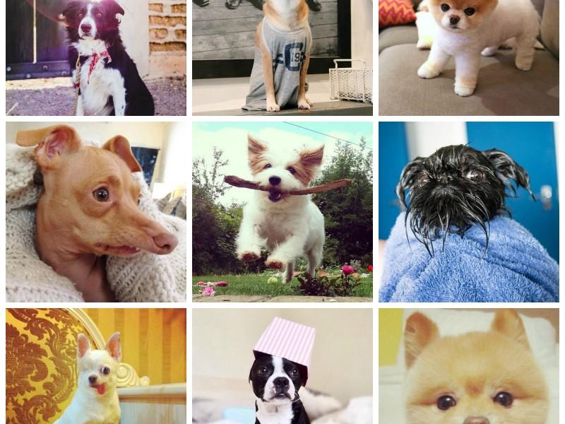 dogs of instagram