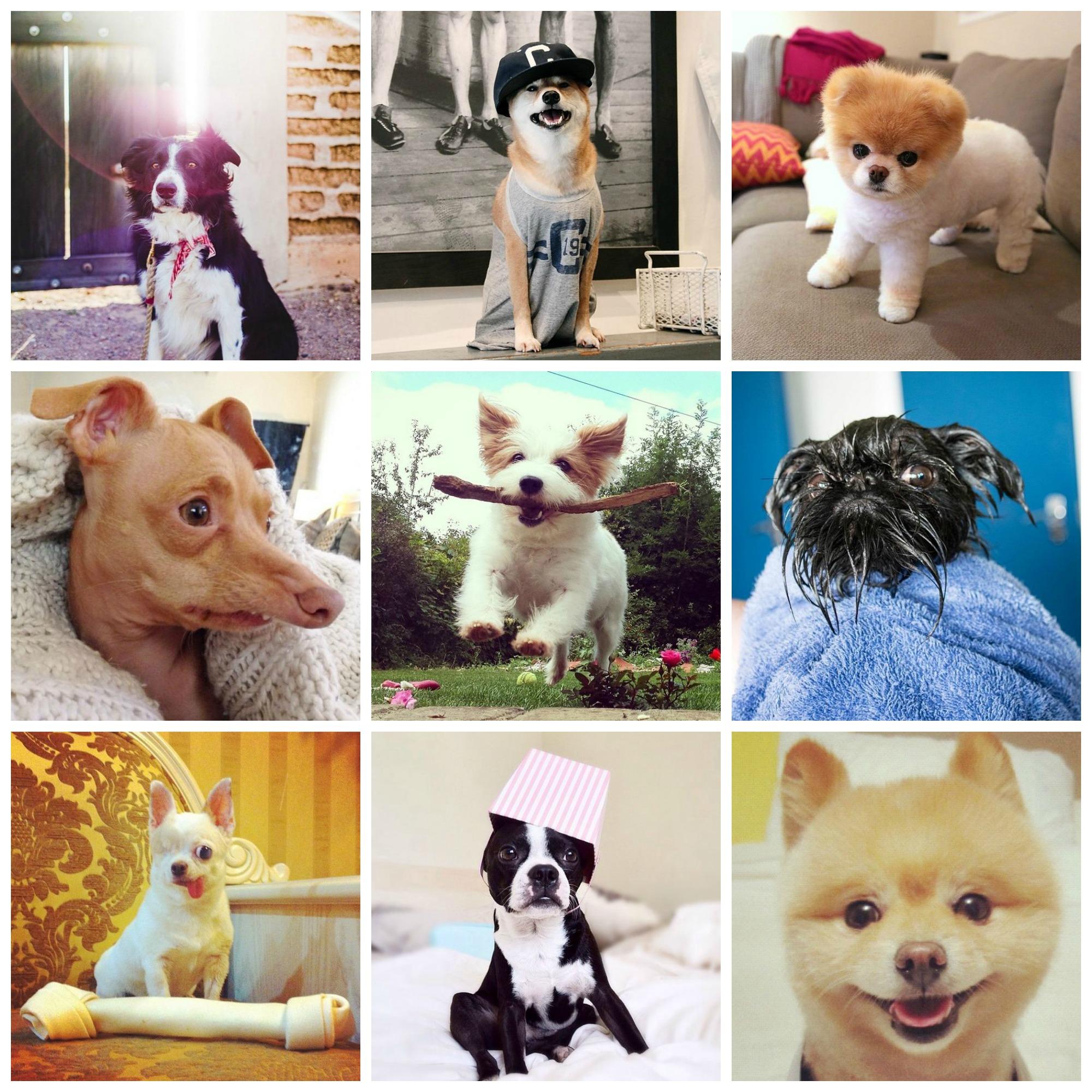 De leukste honden van instagram!